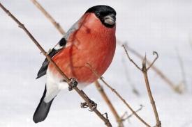 Ptáci vzimě